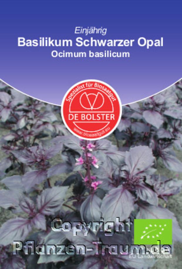 basilikum schwarzer opal ocimum basilicum de bolster bio samen gw rzkraut gew rzpflanze. Black Bedroom Furniture Sets. Home Design Ideas