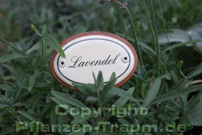 Lavendel Hochwertiges Emaille Schild Für Den Garten Outdoor