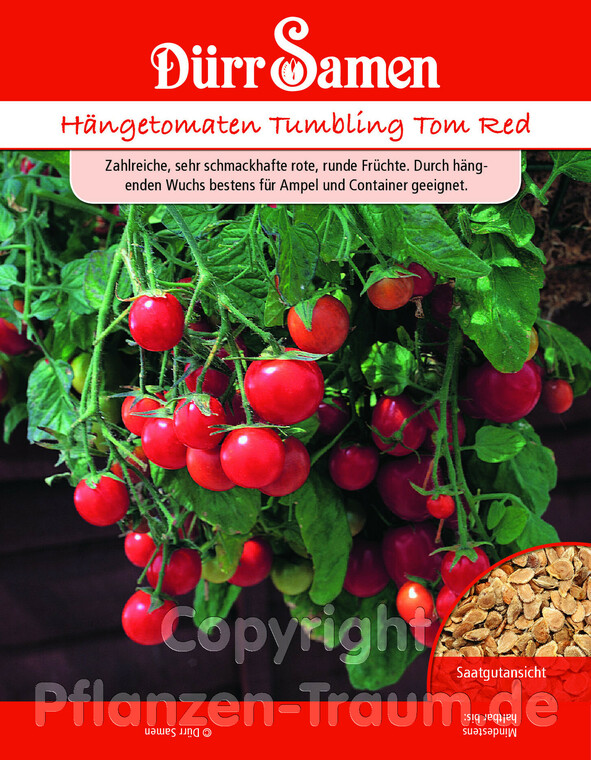 Hängetomaten Tumbling Tom Red