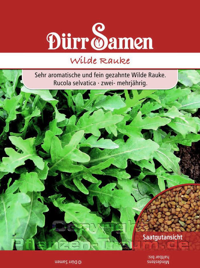Berühmt Rauke Samen, Wilde Rauke, Rucola selvatica, Samen Dürr | Pflanzen #JR_65