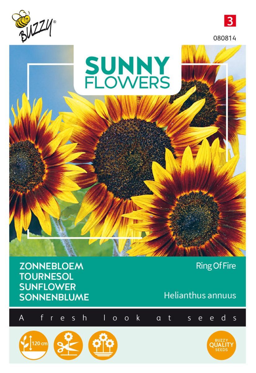 Sonnenblumen Ring of Fire Samen Helianthus