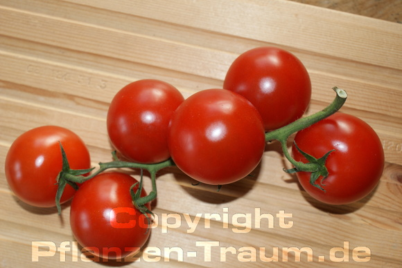 Tomaten Red Cherry Coctailtomate Jungpflanze Lycopersicum